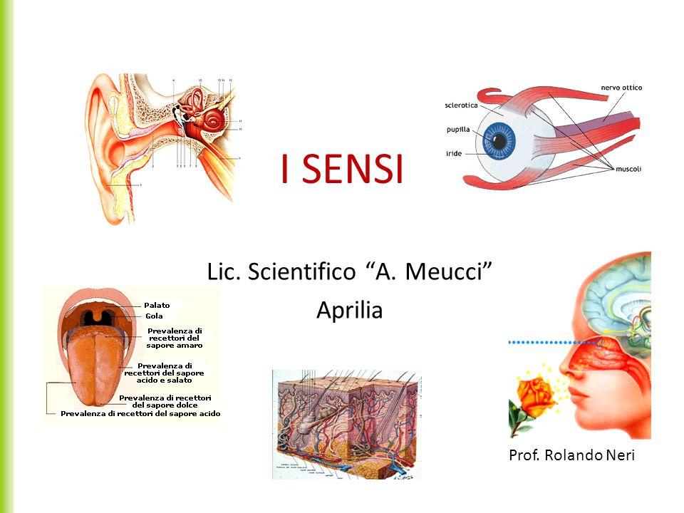1.La percezione degli stimoli 1.1I recettori sensoriali 1.2la trasduzione e la trasmissione dellimpulso nervoso 1.3Lelaborazione delle informazioni 2.Locchio e la ricezione della luce 2.1La macchia oculare e locchio composto 2.2Locchio a lente singola 2.3Il cristallino e i difetti della vista 3.Lorecchio: la ricezione dei suoni e lequilibrio 3.1Lorecchio e il senso delludito 3.2Lorgano dellequilibrio 4.La ricezione degli altri stimoli 4.1I recettori olfattivi e lolfatto 2.2I bottoni gustativi e il senso del gusto 2.3Il senso del tatto INDICE