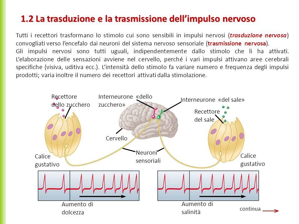 1.2 La trasduzione e la trasmissione dellimpulso nervoso