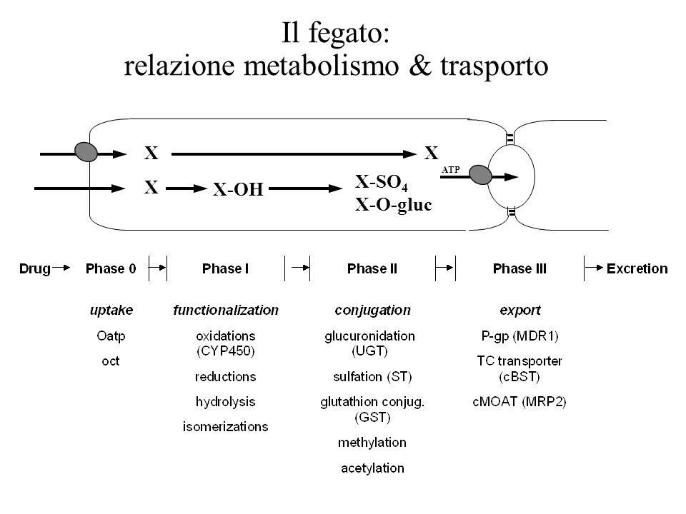 DRUG METABOLISM PRODRUG ACTIVE DRUG ACTIVEMETABOLITE(S)INACTIVEMETABOLITE(S) EXCRETION CONJUGATED COMPOUNDS INACTIVE PHASE I (nonsynthetic reaction) PHASE II (synthetic reaction)