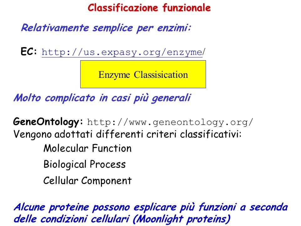 Aspartase [1JSW] Histidase [1B8F] 2-Crystallin [1AUW] Avian eye lens protein E possibile inferire la funzione dal fold.