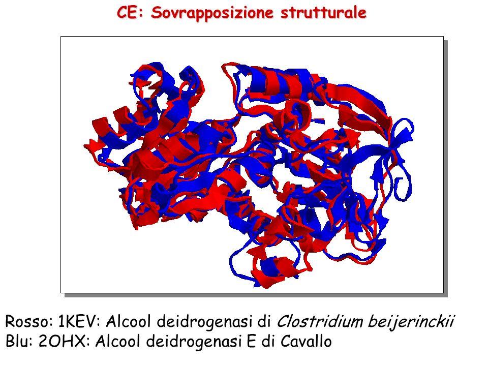 CE: Allineamento strutturale Sovrapposizione a grana grossa: solo il backbone viene considerato