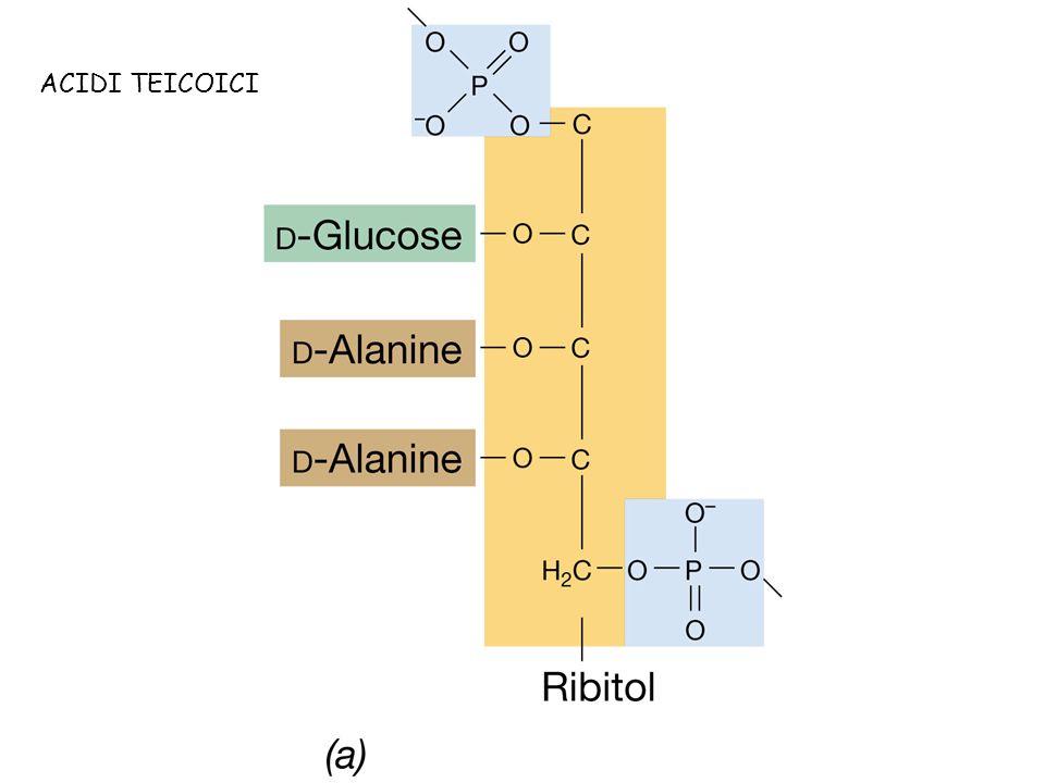 Batteri Gram positivi