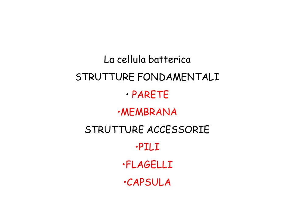 Parete batterica Parete batterica Organizzazione diversa della parete nei Gram positiviGram positivi Gram negativiGram negativi Acido –Alcool resistenti (micobatteri)Acido –Alcool resistenti (micobatteri)