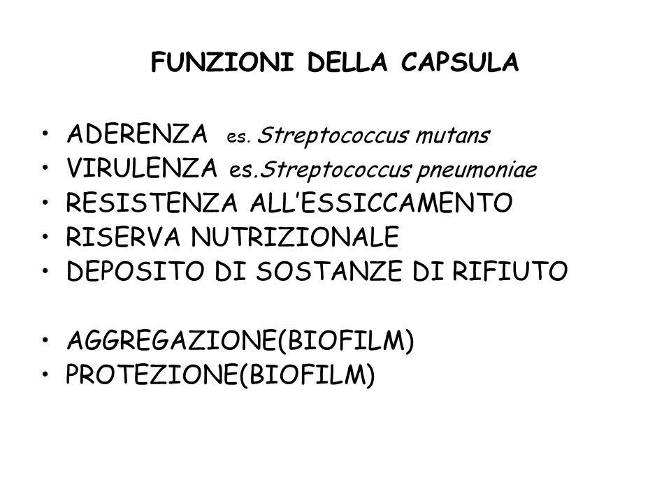 Capsula batterica MicrorganismoComposizione chimicaSubunità strutturali Batteri Gram-positivi Bacillus anthracispolipeptide (acido poliglutammico)Acido D-glutammico Bacillus megateriumpolipeptide e polisaccaridiAcido D-glutammico, amino zuccheri, zuccheri Streptococcus mutanspolisaccaridi(destrano) glucosio Streptococcus pneumoniaepolisaccaridiamino zuccheri, zuccheri Streptococcus pyogenespolisaccaride (acid ialuronico)N-acetyl-glucosammina e acido glucuronico Batteri Gram-negativi Acetobacter xylinumPolisaccaride (cellulosa)glucosio Escherichia colipolisaccaride (colonic acid)glucosio, galattosio, fucosio, acido glucuronico Pseudomonas aeruginosapolisaccarideAcido mannuronico Azotobacter vinelandiipolisaccarideAcido glucuronico Agrobacterium tumefacienspolisaccaride(glucano) glucosio