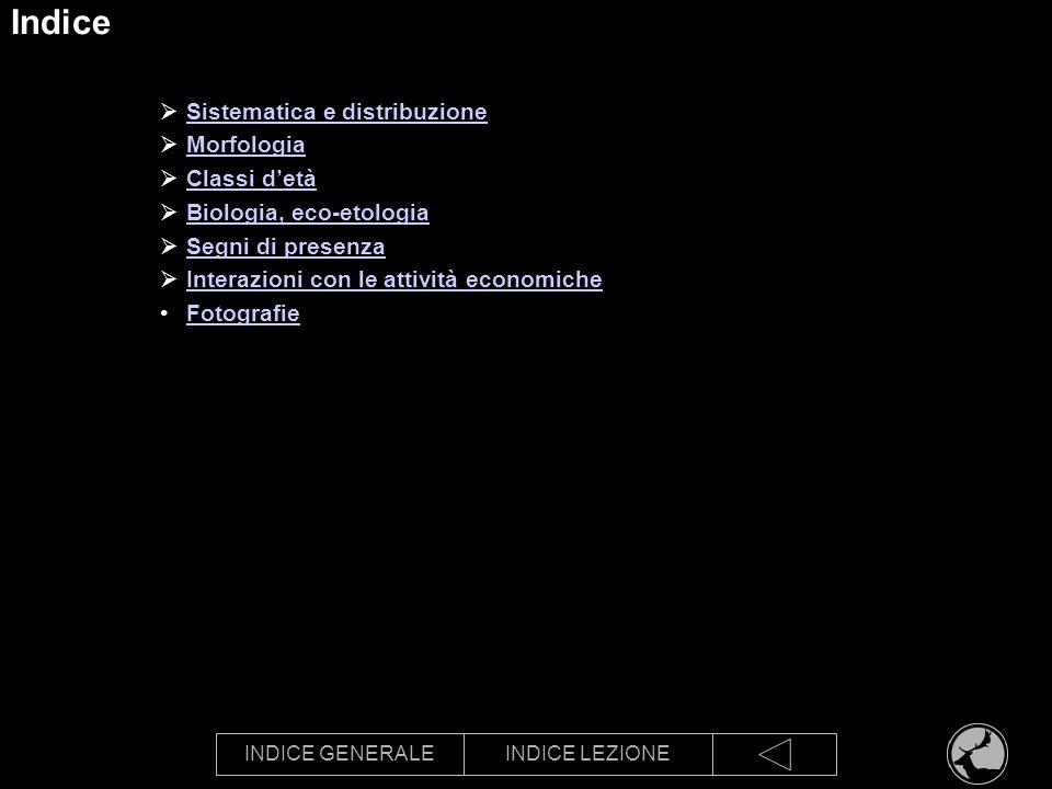 INDICE GENERALEINDICE LEZIONE Indice Sistematica e distribuzione Sistematica Distribuzione Morfologia Classi detà Biologia, eco-etologia Segni di presenza Interazioni con le attività economiche Fotografie
