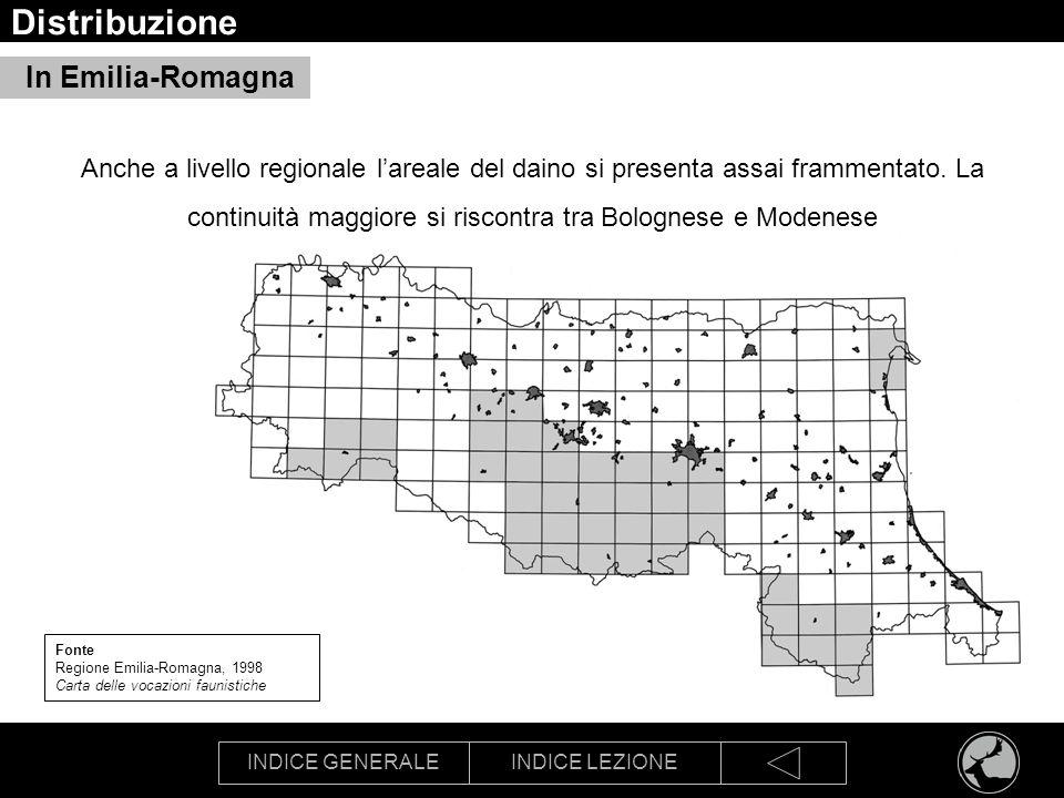 INDICE GENERALEINDICE LEZIONE Morfologia Daino