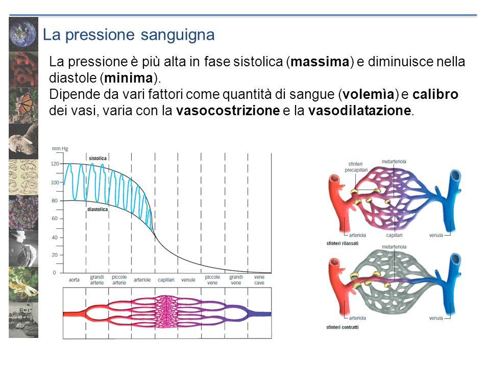 La pressione sanguigna