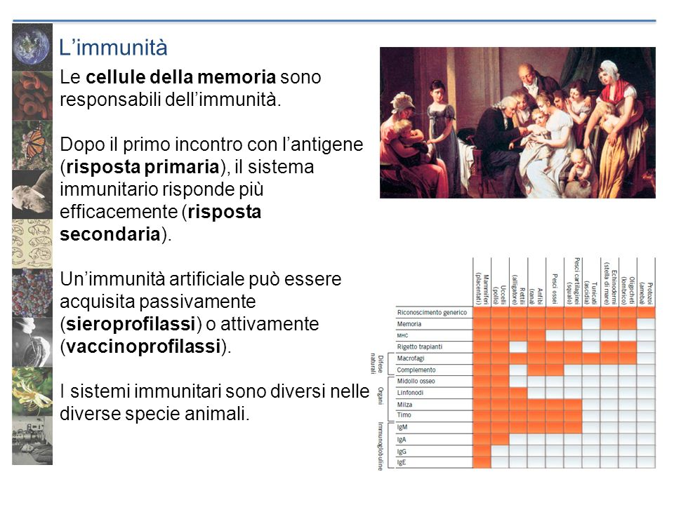 L'immunità Le cellule della memoria sono responsabili dell'immunità.