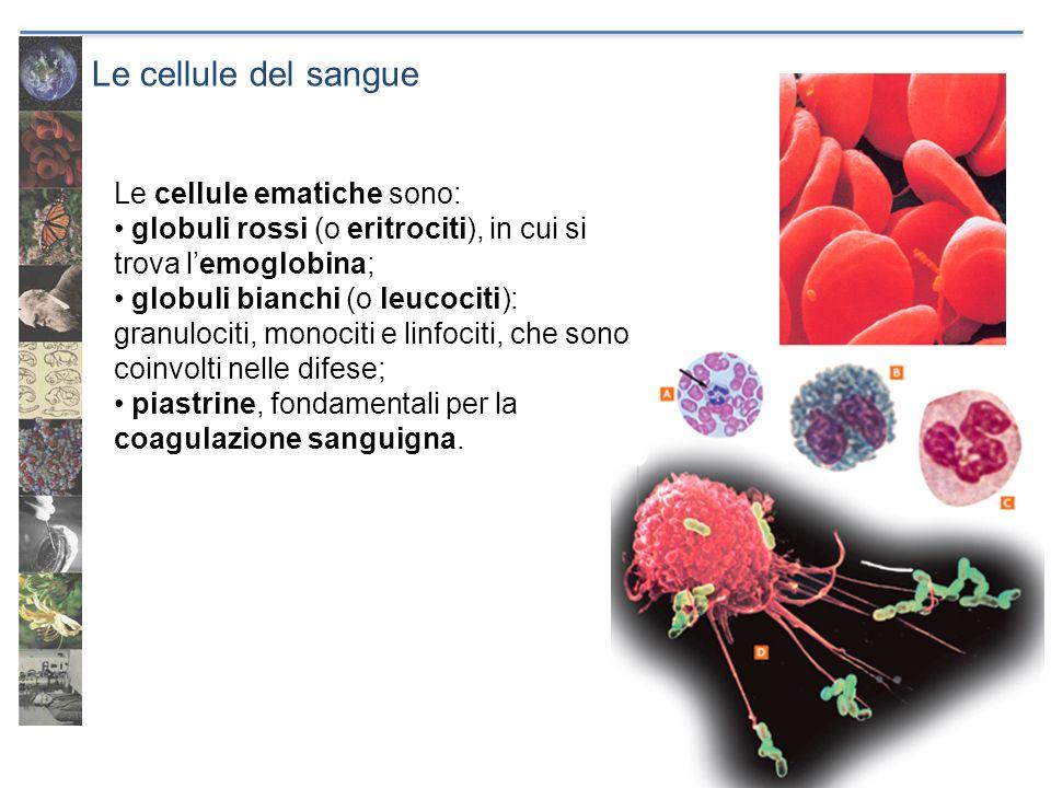 Le cellule del sangue Le cellule ematiche sono: