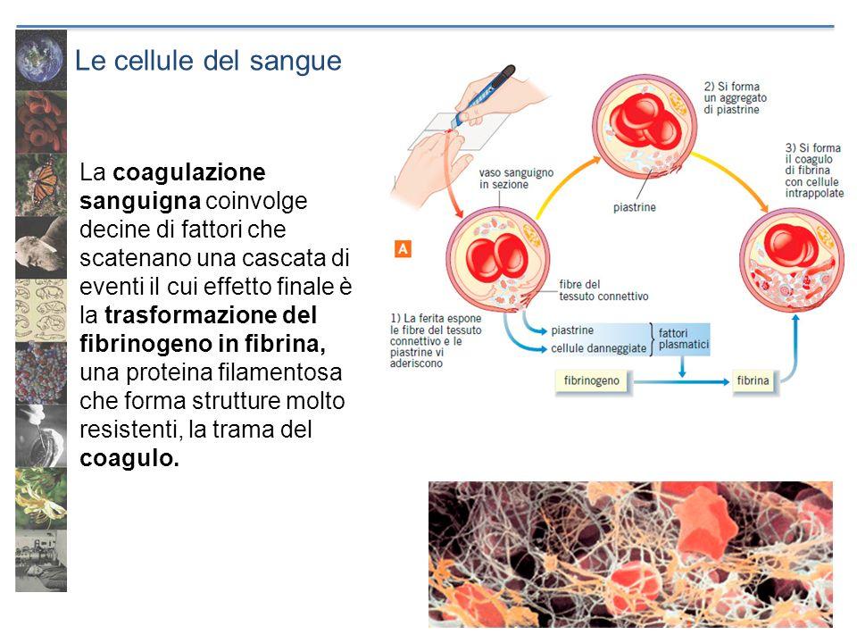 Le cellule del sangue