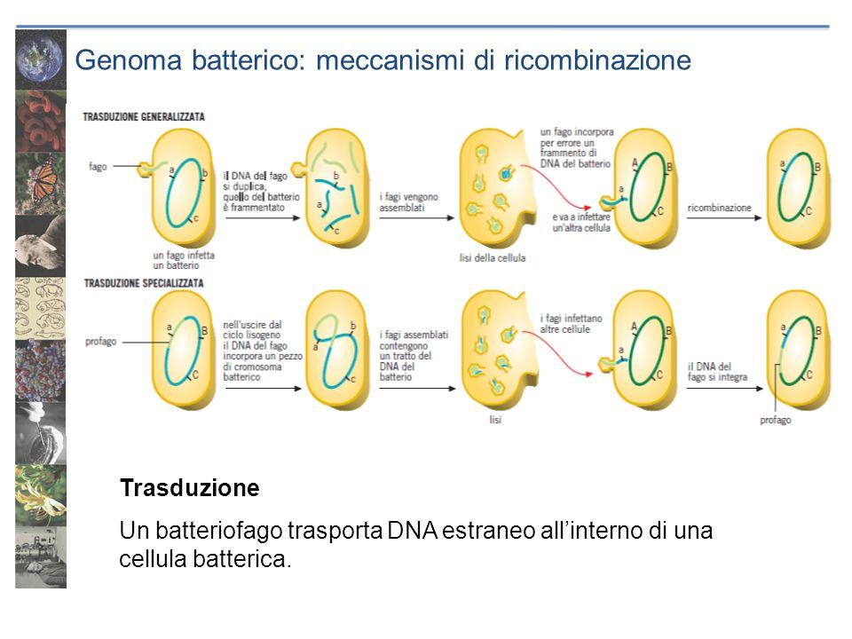 Genoma batterico: meccanismi di ricombinazione