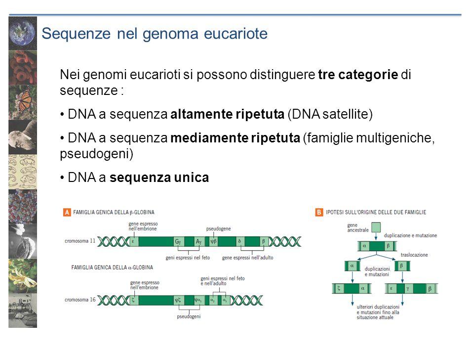 Sequenze nel genoma eucariote