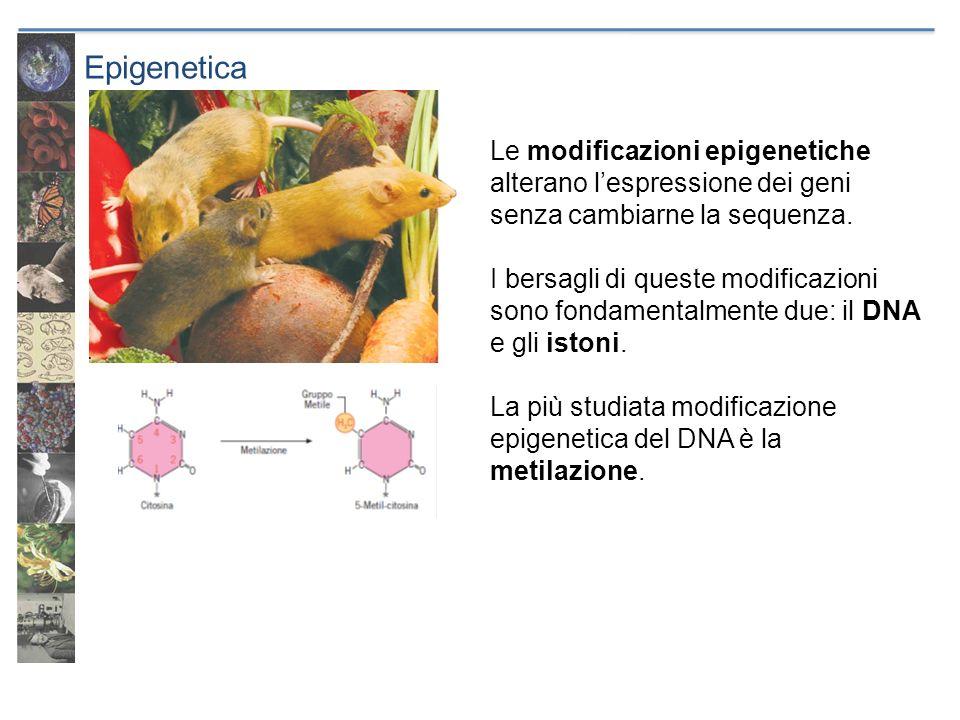 Epigenetica Le modificazioni epigenetiche alterano l'espressione dei geni senza cambiarne la sequenza.