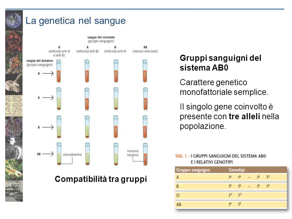 La genetica nel sangue Gruppi sanguigni del sistema AB0