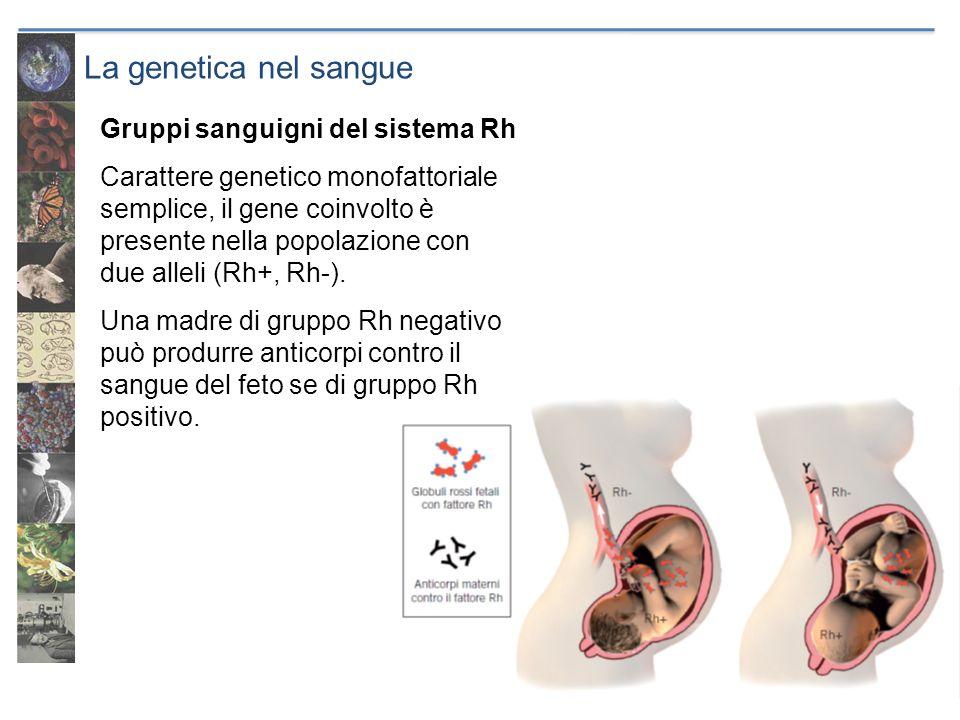 La genetica nel sangue Gruppi sanguigni del sistema Rh