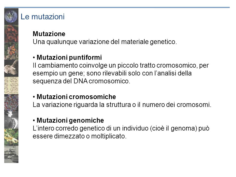 Le mutazioni Mutazione