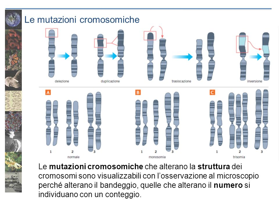Le mutazioni cromosomiche