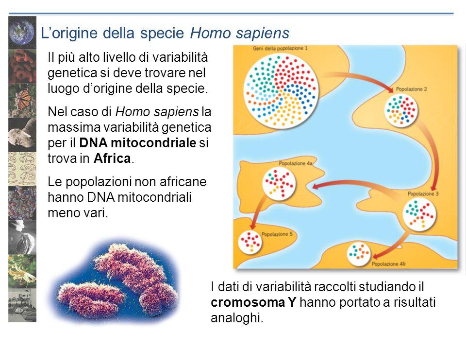 L'origine della specie Homo sapiens