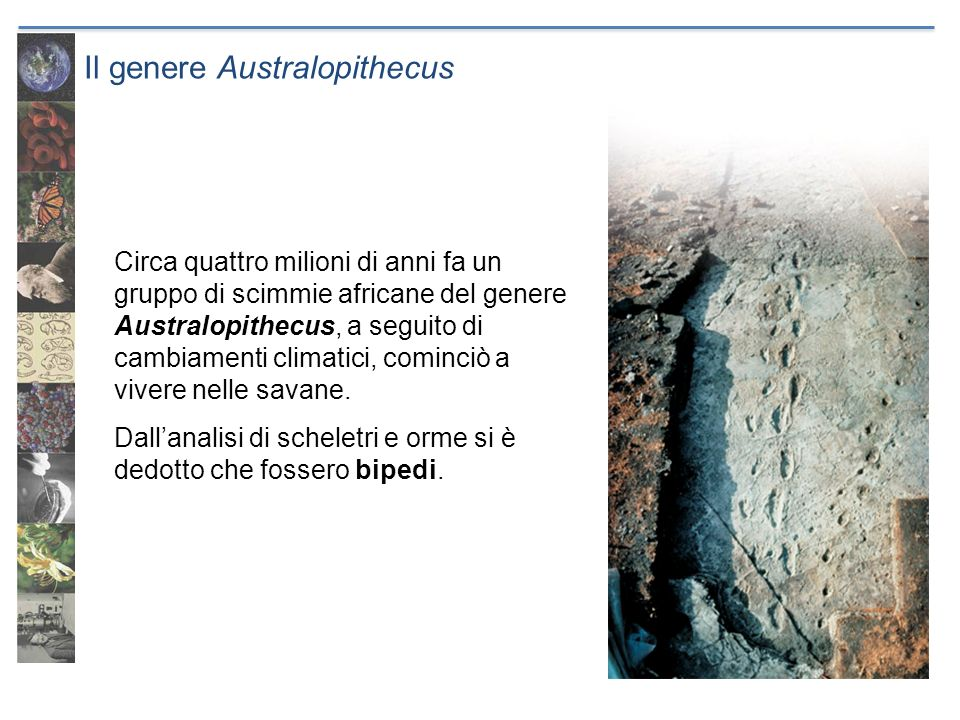 Il genere Australopithecus