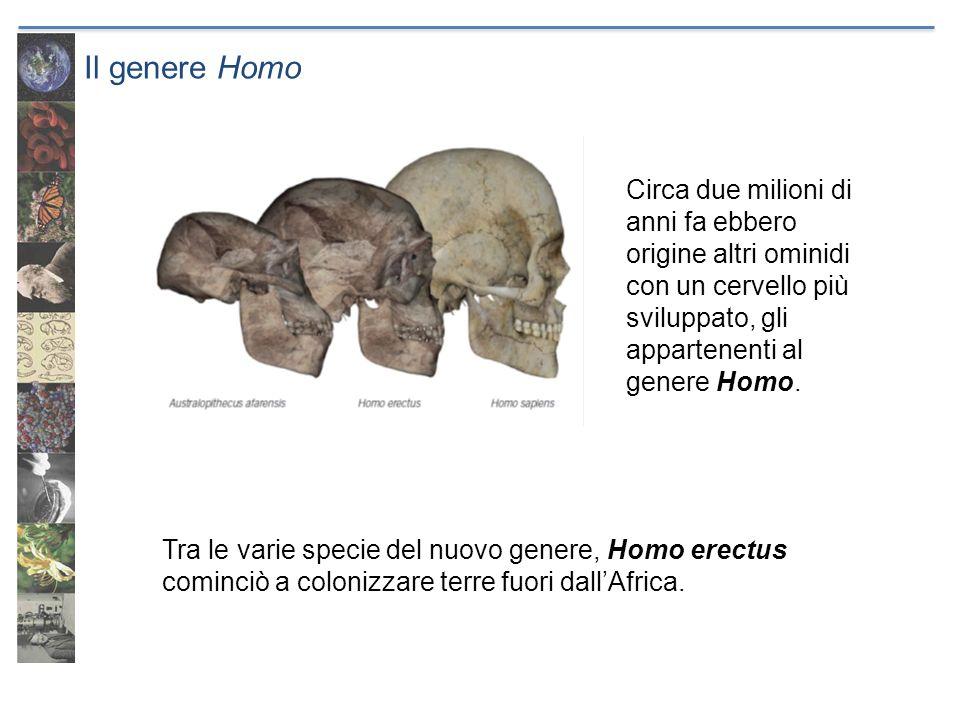 Il genere Homo Tra le varie specie del nuovo genere, Homo erectus cominciò a colonizzare terre fuori dall'Africa.