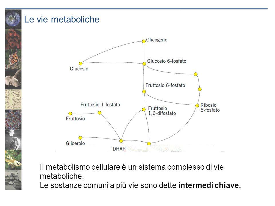 Le vie metaboliche Il metabolismo cellulare è un sistema complesso di vie metaboliche.