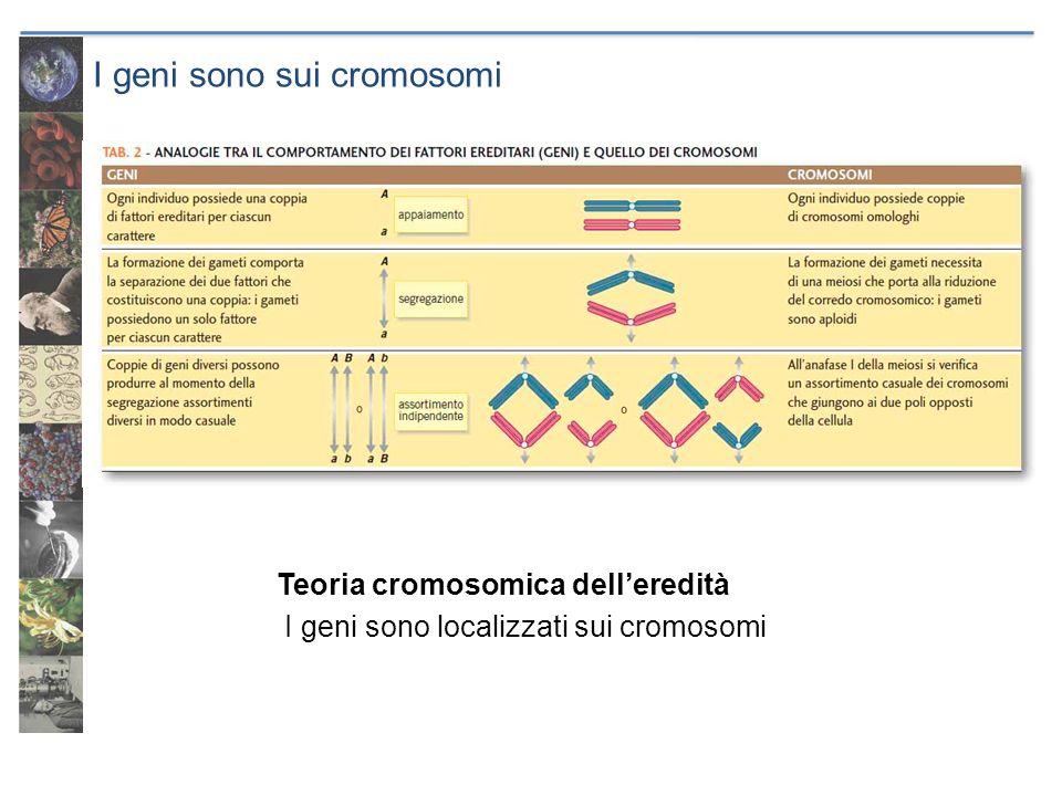 I geni sono sui cromosomi