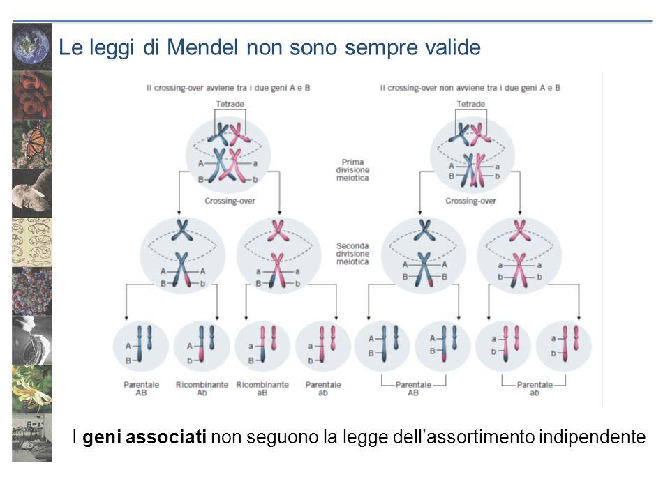 Le leggi di Mendel non sono sempre valide