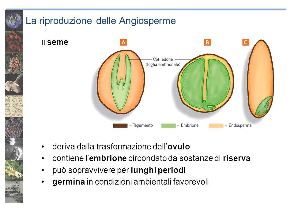 La riproduzione delle Angiosperme