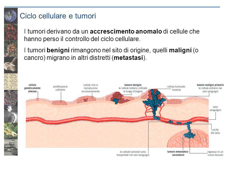 Ciclo cellulare e tumori