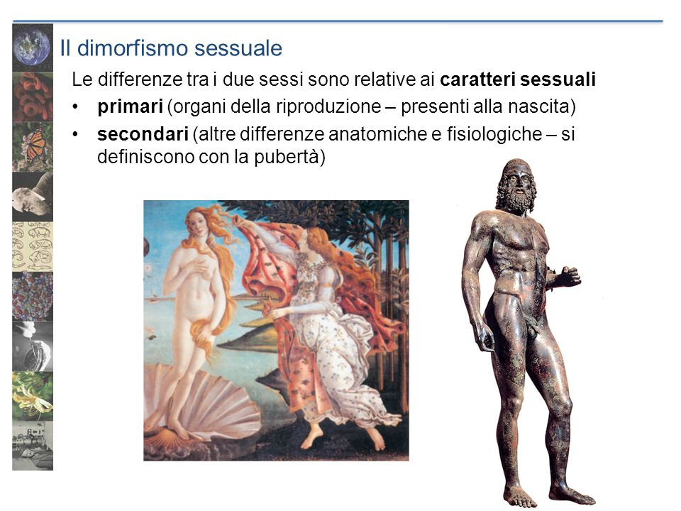 Il dimorfismo sessuale