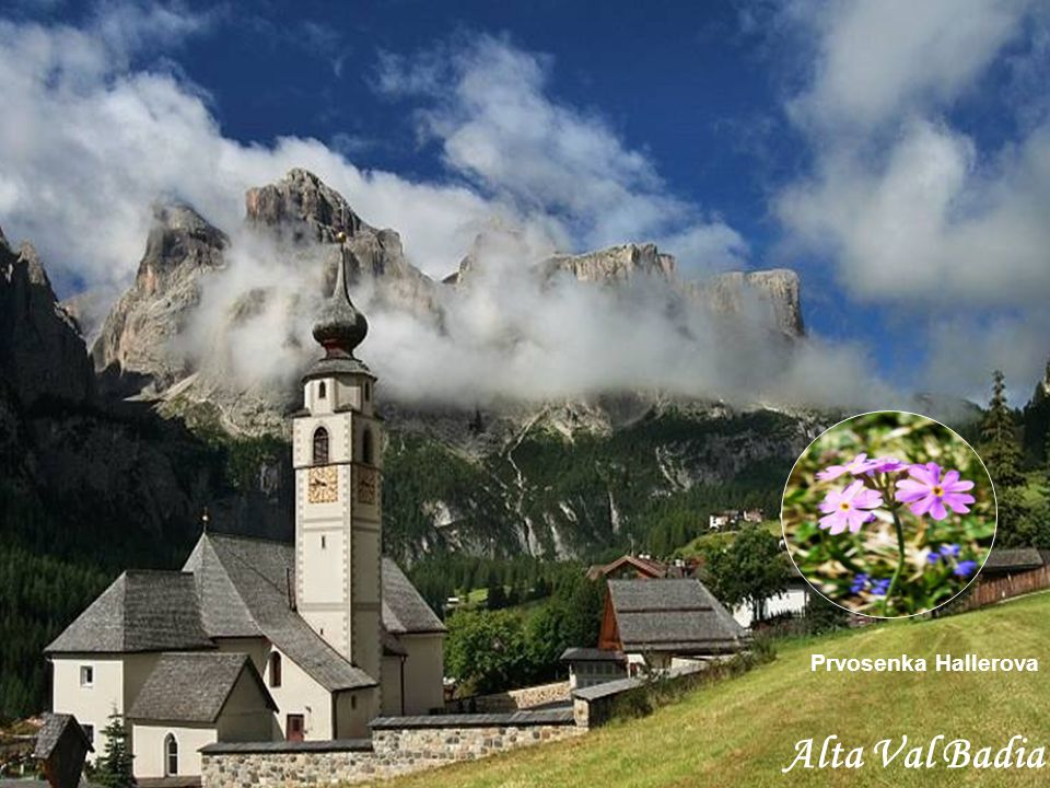Prvosenka Hallerova Alta Val Badia