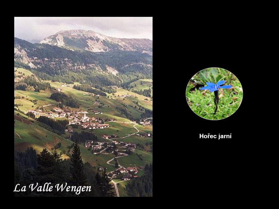 Hořec jarní La Valle Wengen