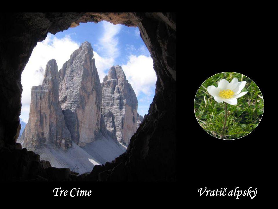 Tre Cime Vratič alpský