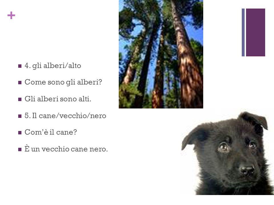 4. gli alberi/alto Come sono gli alberi Gli alberi sono alti. 5. Il cane/vecchio/nero. Com'è il cane