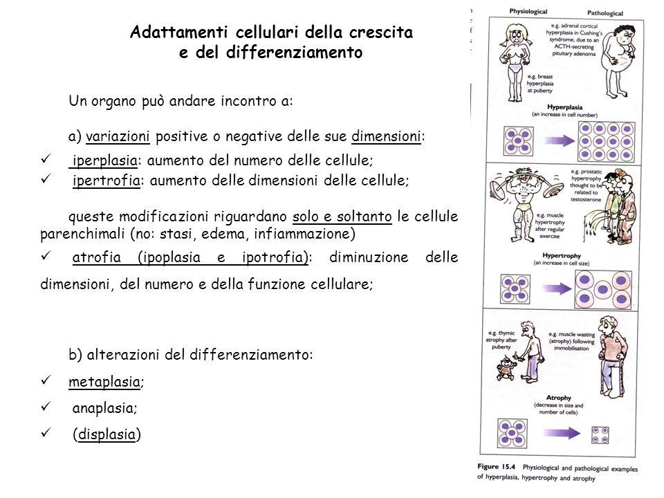 Adattamenti cellulari della crescita e del differenziamento