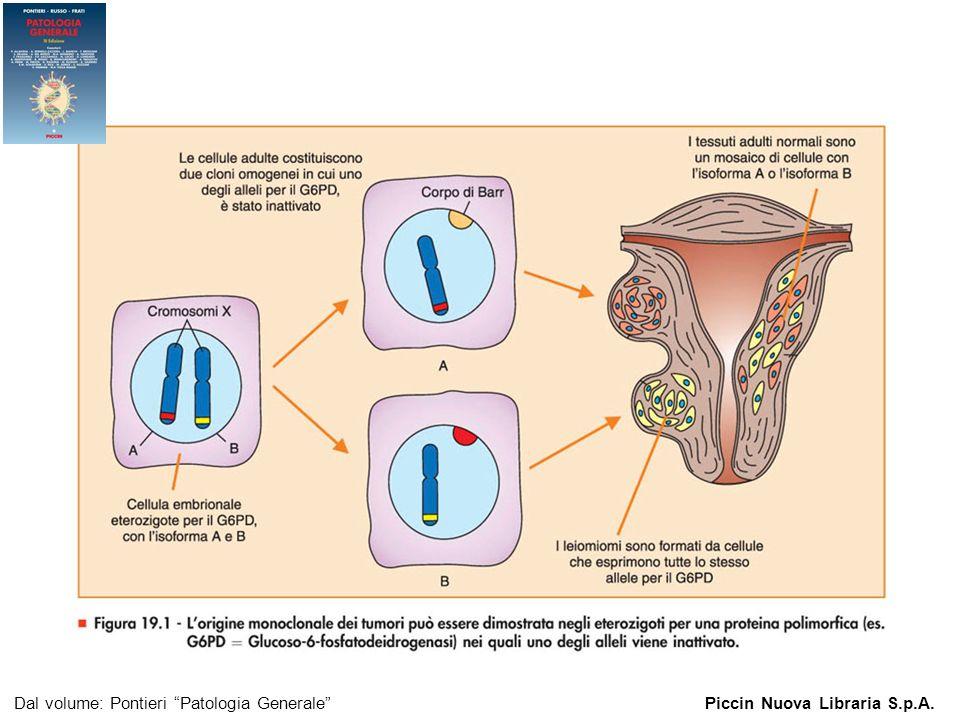 Figura 19.1 - L origine monoclonale dei tumori può essere dimostrata negli eterozigoti.
