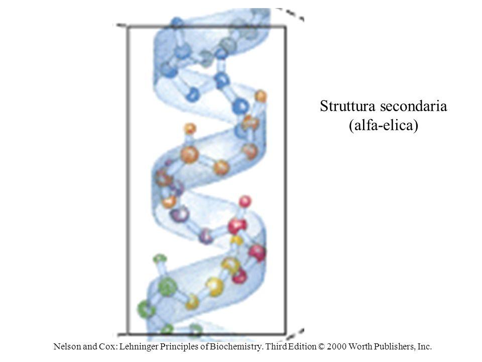 Struttura secondaria (alfa-elica)