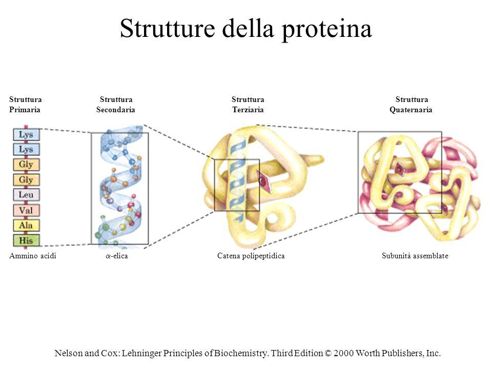 Strutture della proteina