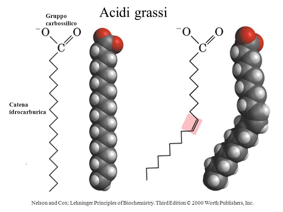 Acidi grassi Gruppo carbossilico Catena idrocarburica