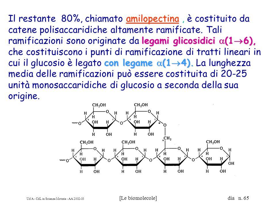 Il restante 80%, chiamato amilopectina , è costituito da catene polisaccaridiche altamente ramificate.