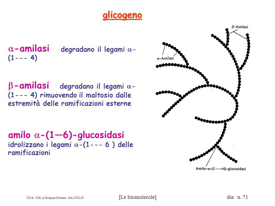 glicogeno -amilasi degradano il legami -(1--- 4)