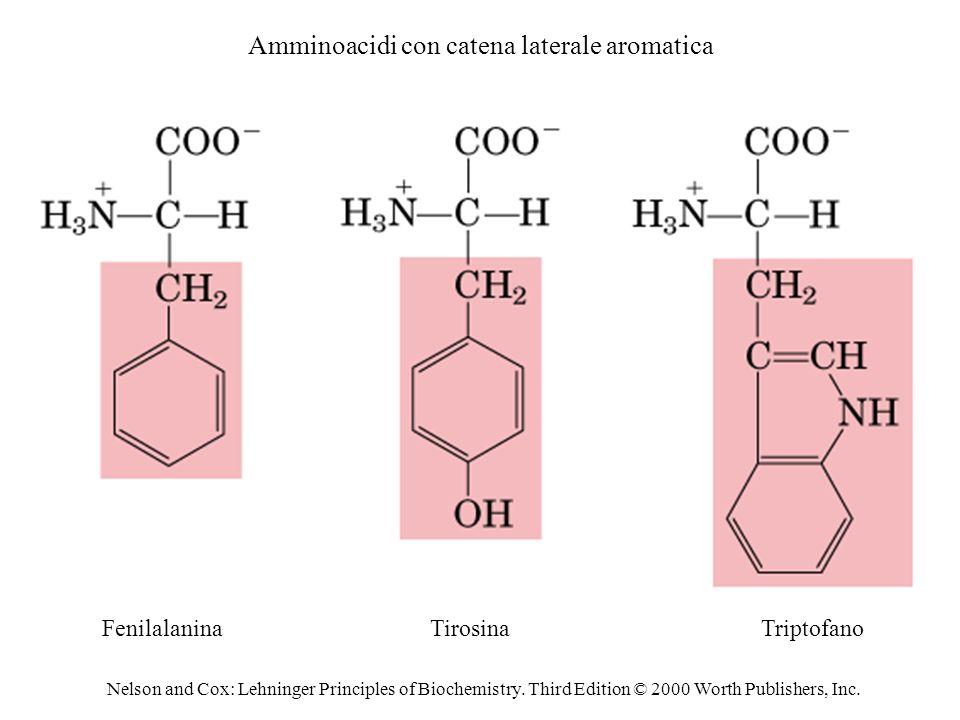 Amminoacidi con catena laterale aromatica