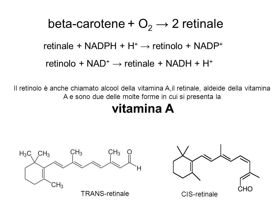 beta-carotene + O2 → 2 retinale