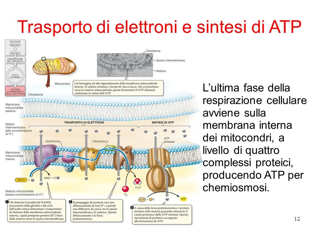 Trasporto di elettroni e sintesi di ATP
