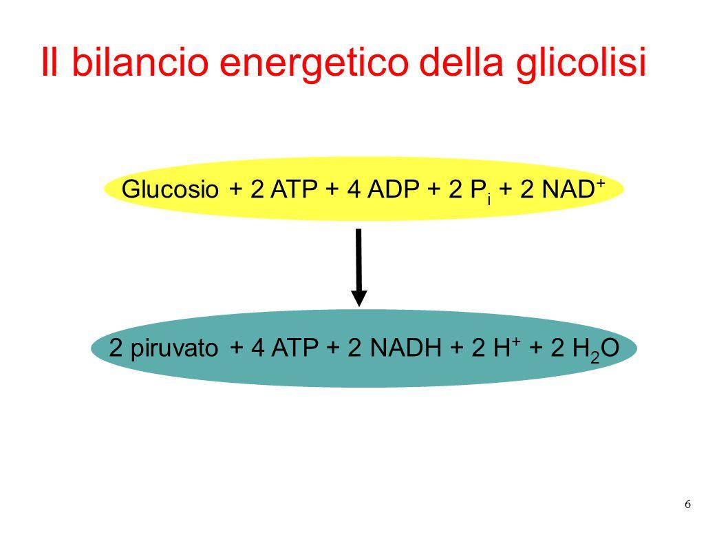 Il bilancio energetico della glicolisi
