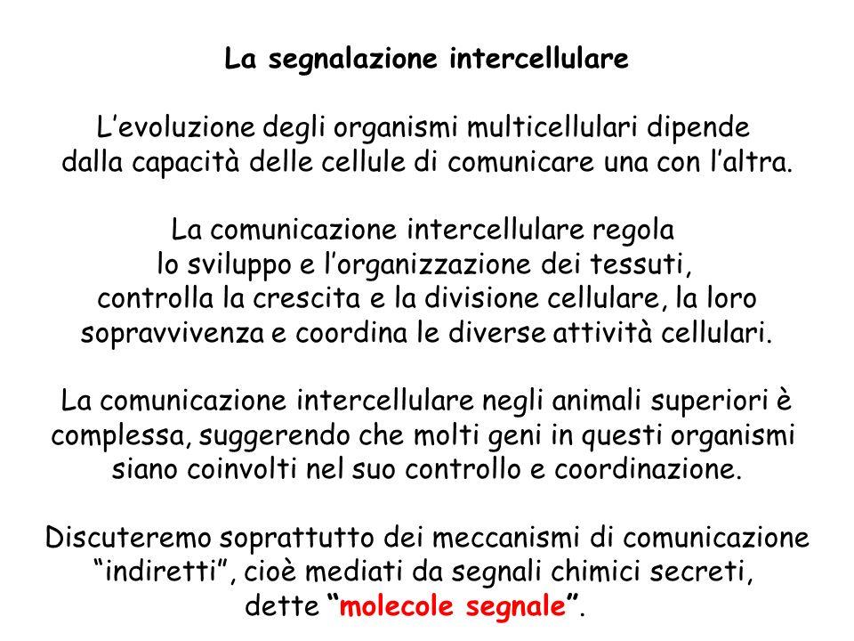 La segnalazione intercellulare