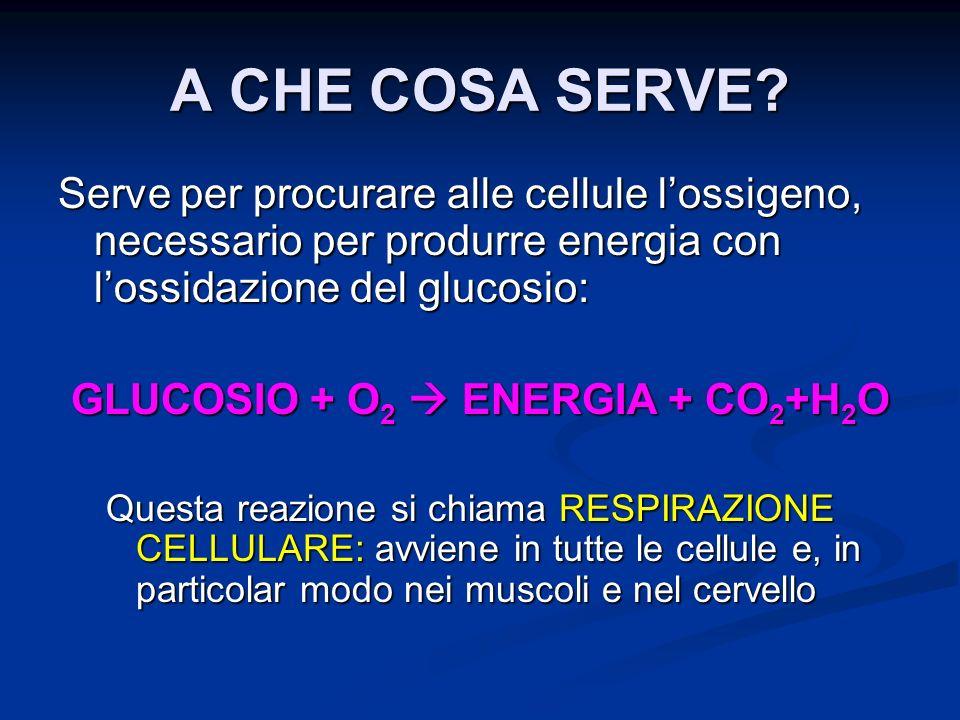 GLUCOSIO + O2  ENERGIA + CO2+H2O