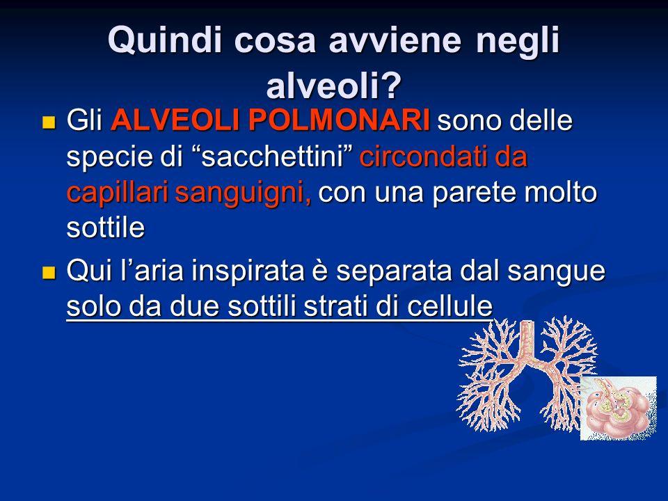 Quindi cosa avviene negli alveoli
