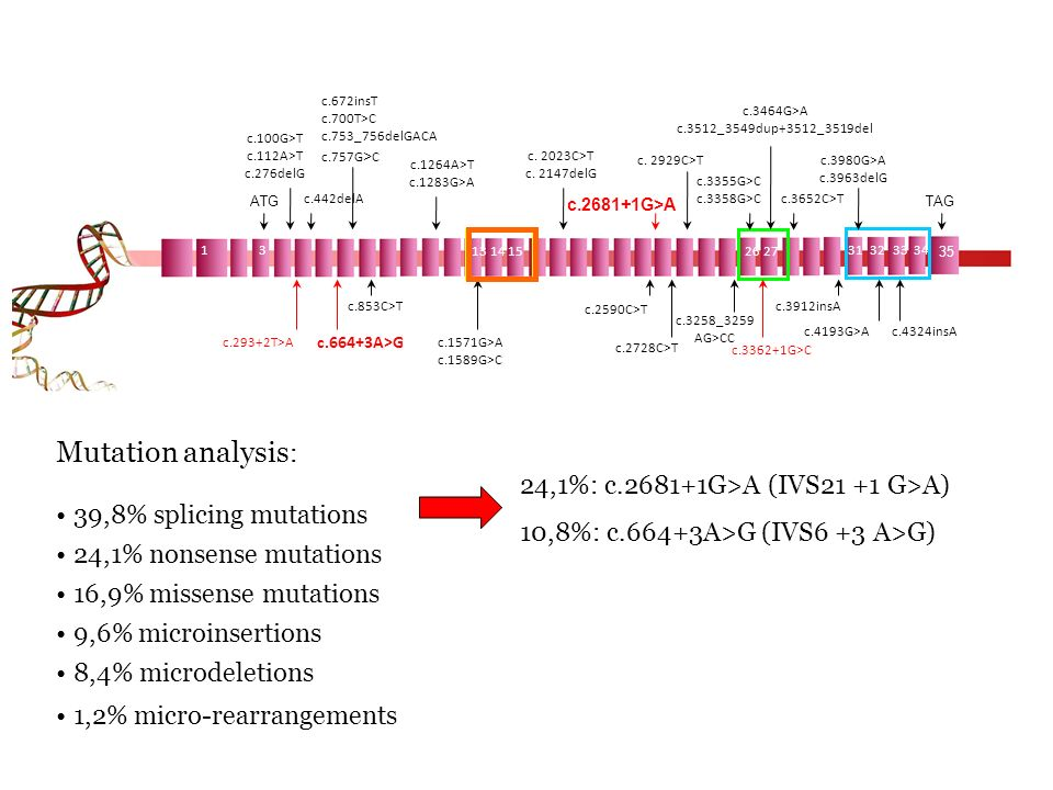 Mutation analysis: 39,8% splicing mutations