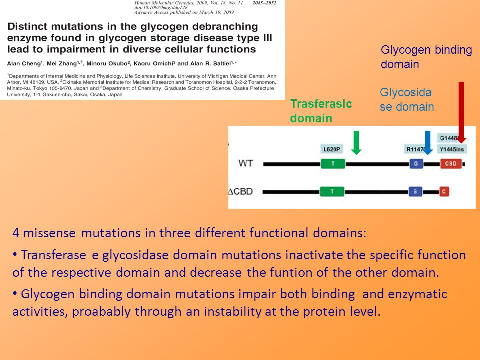 4 missense mutations in three different functional domains: